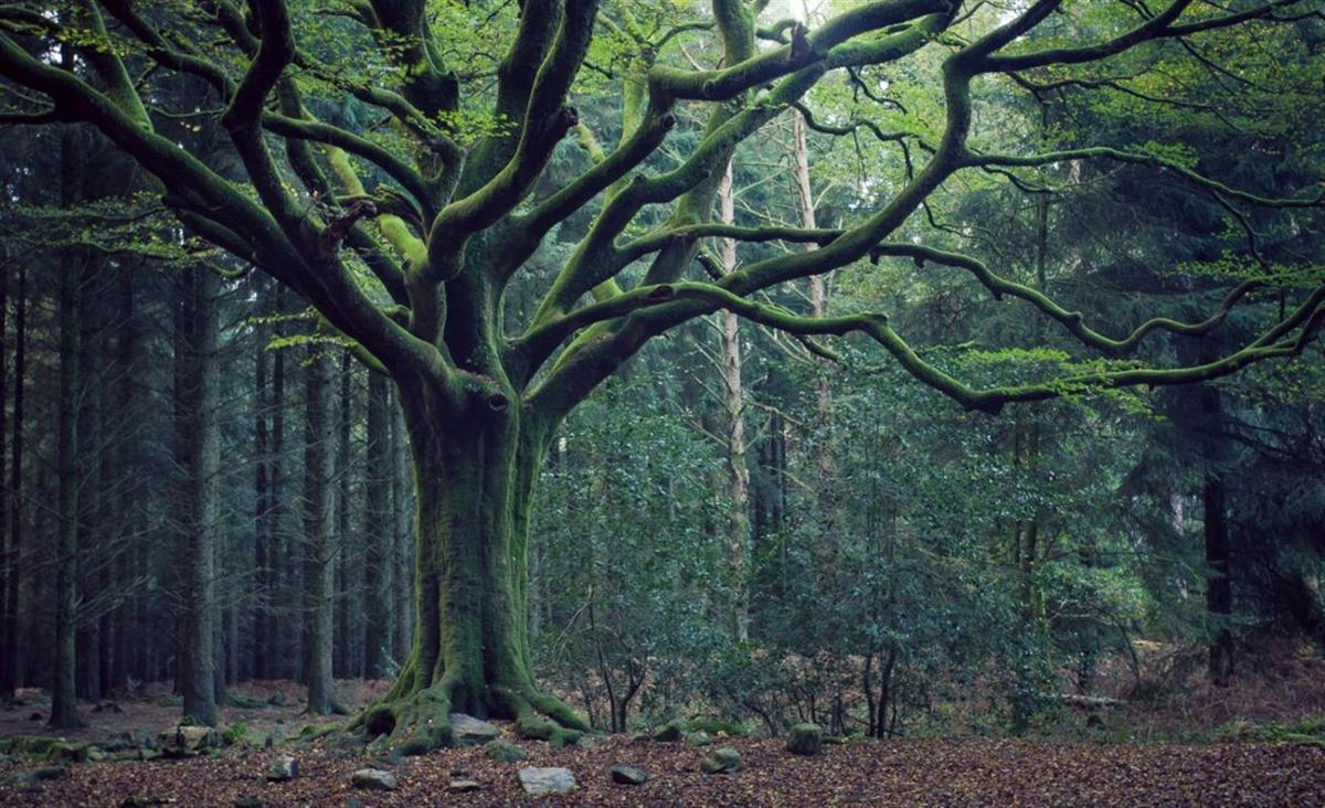 Découverte de la forêt de Brocéliande